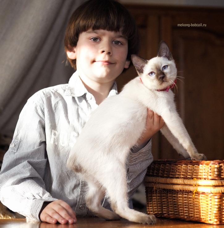 продажа котят бобтейла