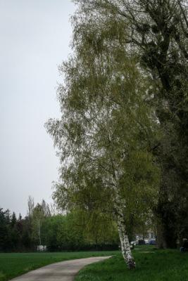 http://data22.gallery.ru/albums/gallery/251524-90c46-67035978-400-u5394c.jpg