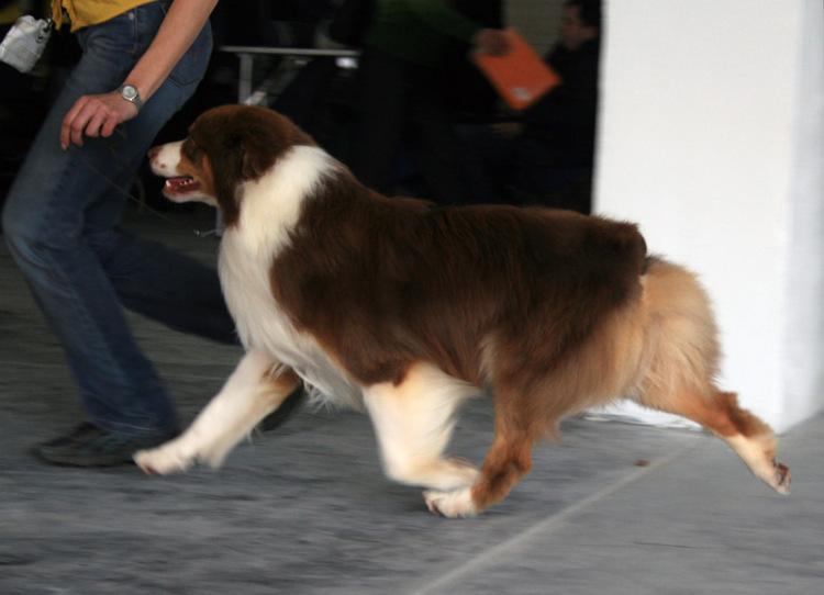 Выставочные успехи наших собак - 4 - Страница 5 325030-20bc4-65298394-m750x740-u87d04