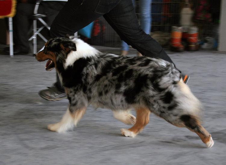 Выставочные успехи наших собак - 4 - Страница 5 325030-2a7b5-65298539-m750x740-ue24b1