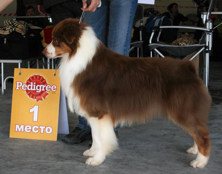Выставочные успехи наших собак - 4 - Страница 5 325030-38974-65298385-m750x740-u98614