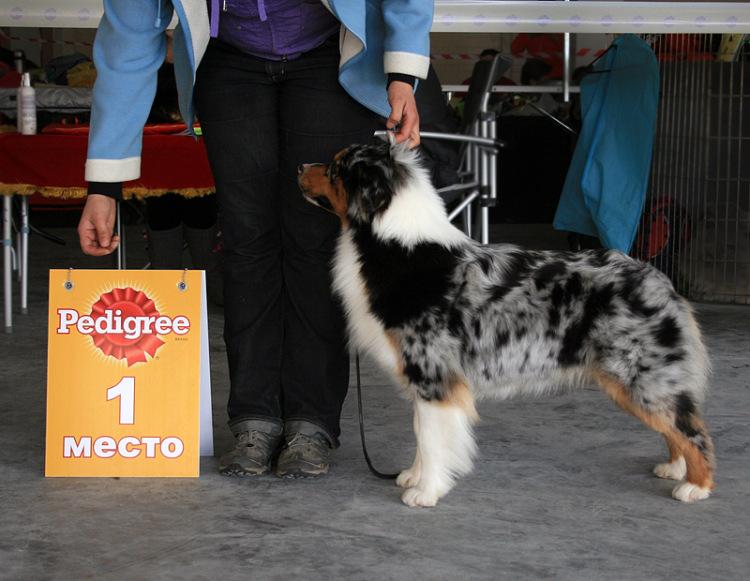 Выставочные успехи наших собак - 4 - Страница 5 325030-9b1d4-65298534-m750x740-u4df3f