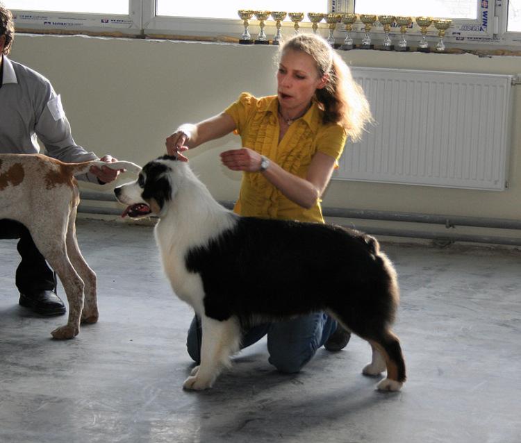 Выставочные успехи наших собак - 4 - Страница 5 325030-ad191-65298553-m750x740-ue5d61