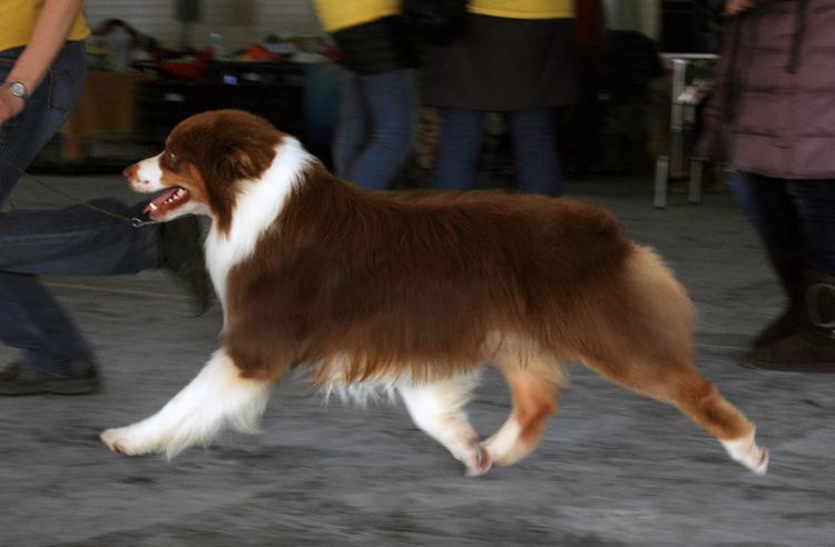 Выставочные успехи наших собак - 4 - Страница 5 325030-b6fbf-65298389-m750x740-ue6a3c