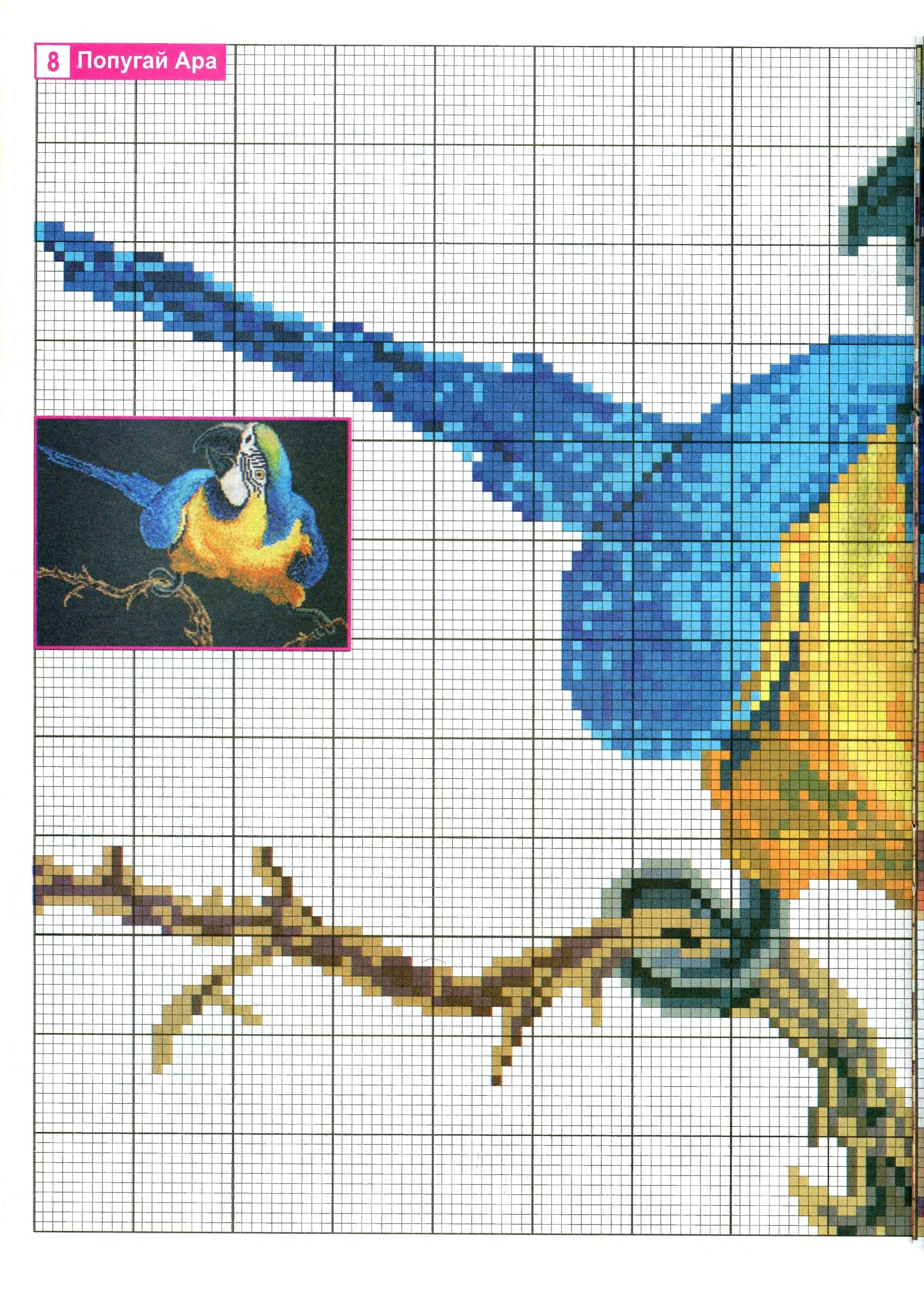 Схемы вышивки «попугаи» - Вышивка крестом 24